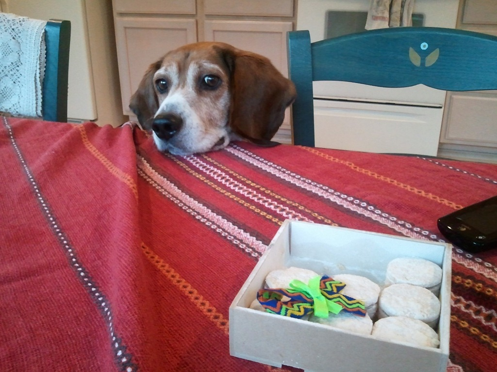 Funny Beagle Pictures With Captions